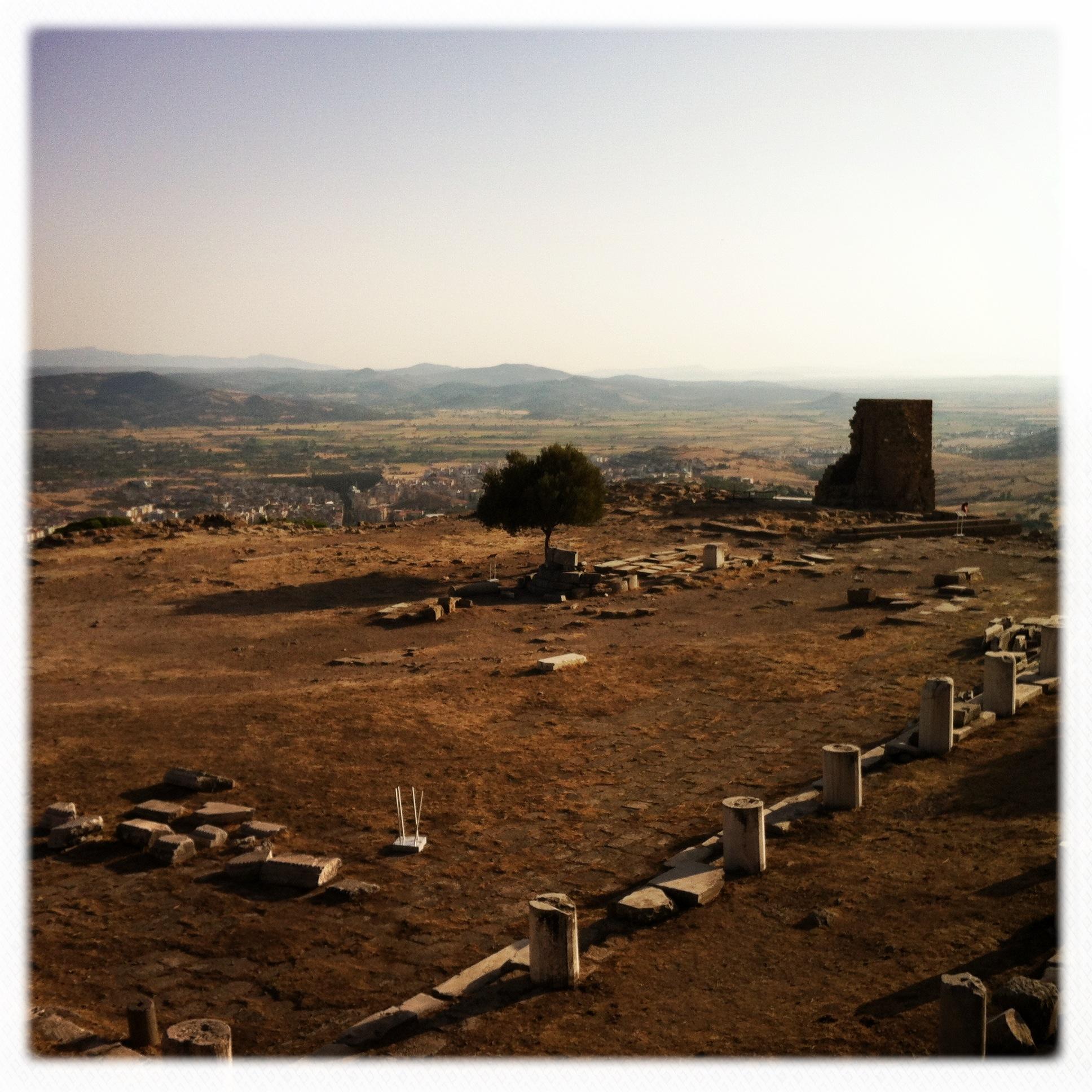 Alberello di Pergamo